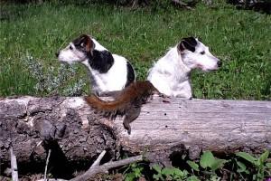 Jacks_squirrel_postim