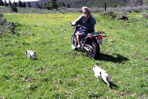 Motorcycle_camping_postim