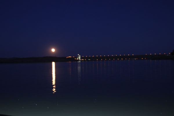 Moon_paddlefish_postim